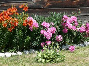 Sodo gėlės. Vytauto Visocko (Slaptai.lt) nuotr.
