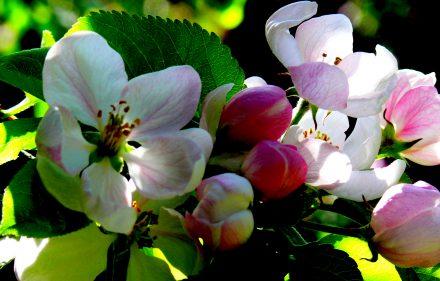 Gėlių žiedai. Vytauto Visocko (Slaptai.lt) nuotr.