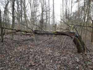 Nuvirtęs medis