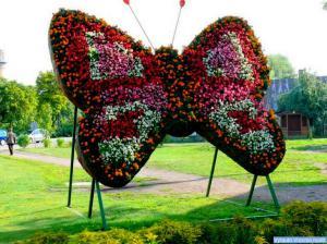 Lietuvos drugelis