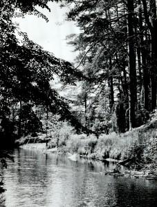 Skriogžlės upelis