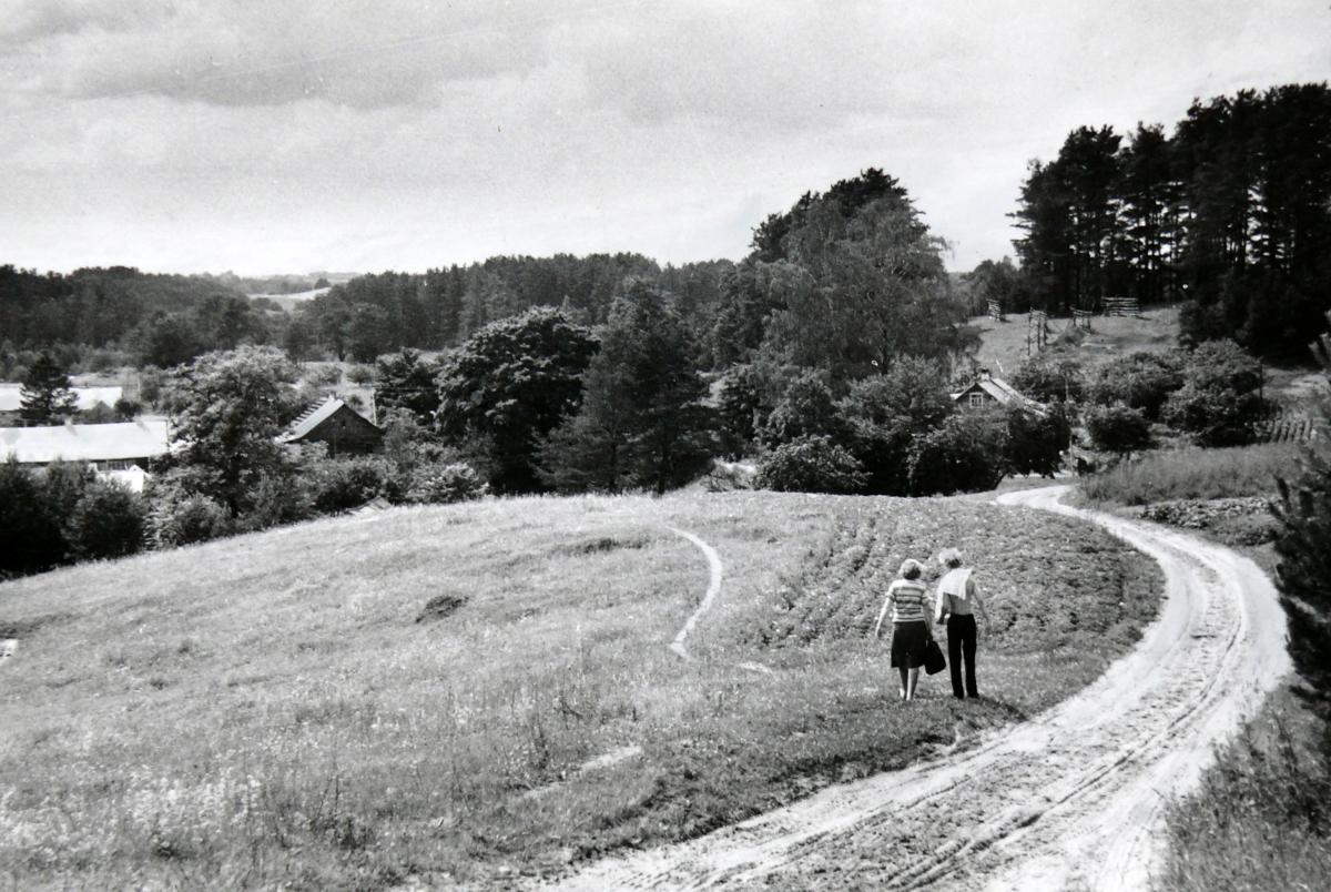 Kelias į Salų kaimą