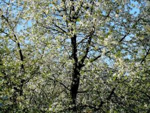 Pavasaris (10)