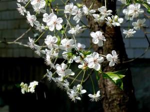 Pavasaris (3)