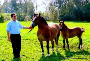 Algirdas Kalinauskas prie tėvo kumelės su kumeliuku.