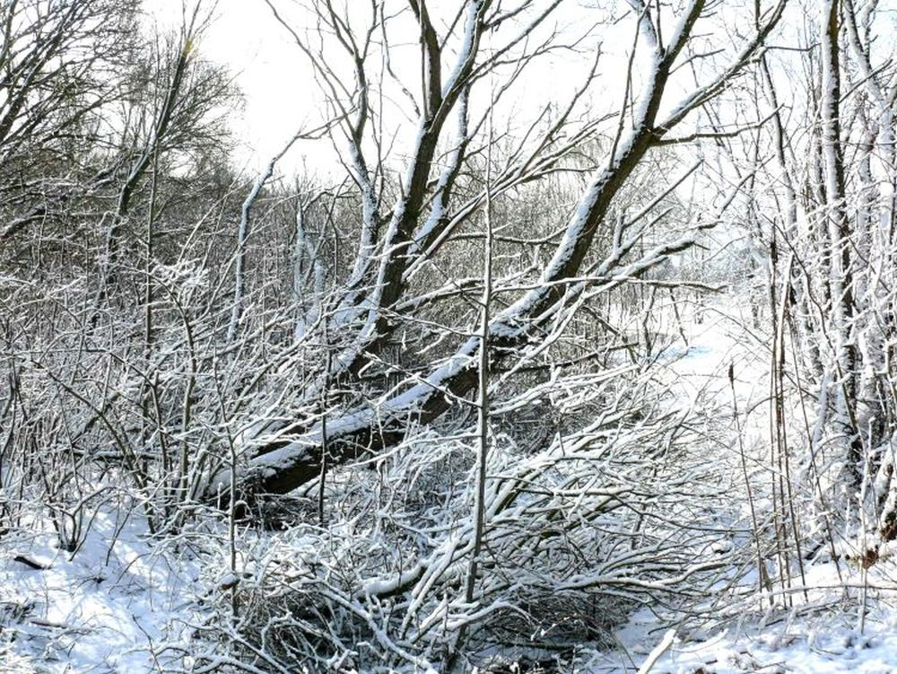 Išvirtę medžiai. Vytauto Visocko (Slaptai.lt) nuotr.