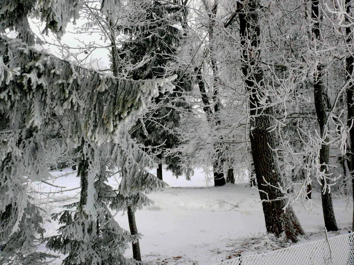 Lietuviškas miškas gilią žiemą. Slaptai.lt (Vytautas Visockas) nuotr.