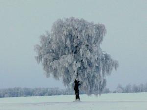 Apšerkšnijusios mūsų žiemos. Vytauto Visocko (Slaptai.lt) nuotr.