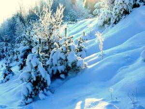 Sniego - iki kaklo. Vytauto Visocko (Slaptai.lt) nuotr.