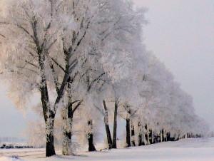 Tokių žiemų Lietuvoje - jau reta. Slaptai.lt (Vytautas Visockas) nuotr.