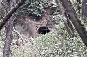 Tunelis girioje. Slaptai.lt nuotr.