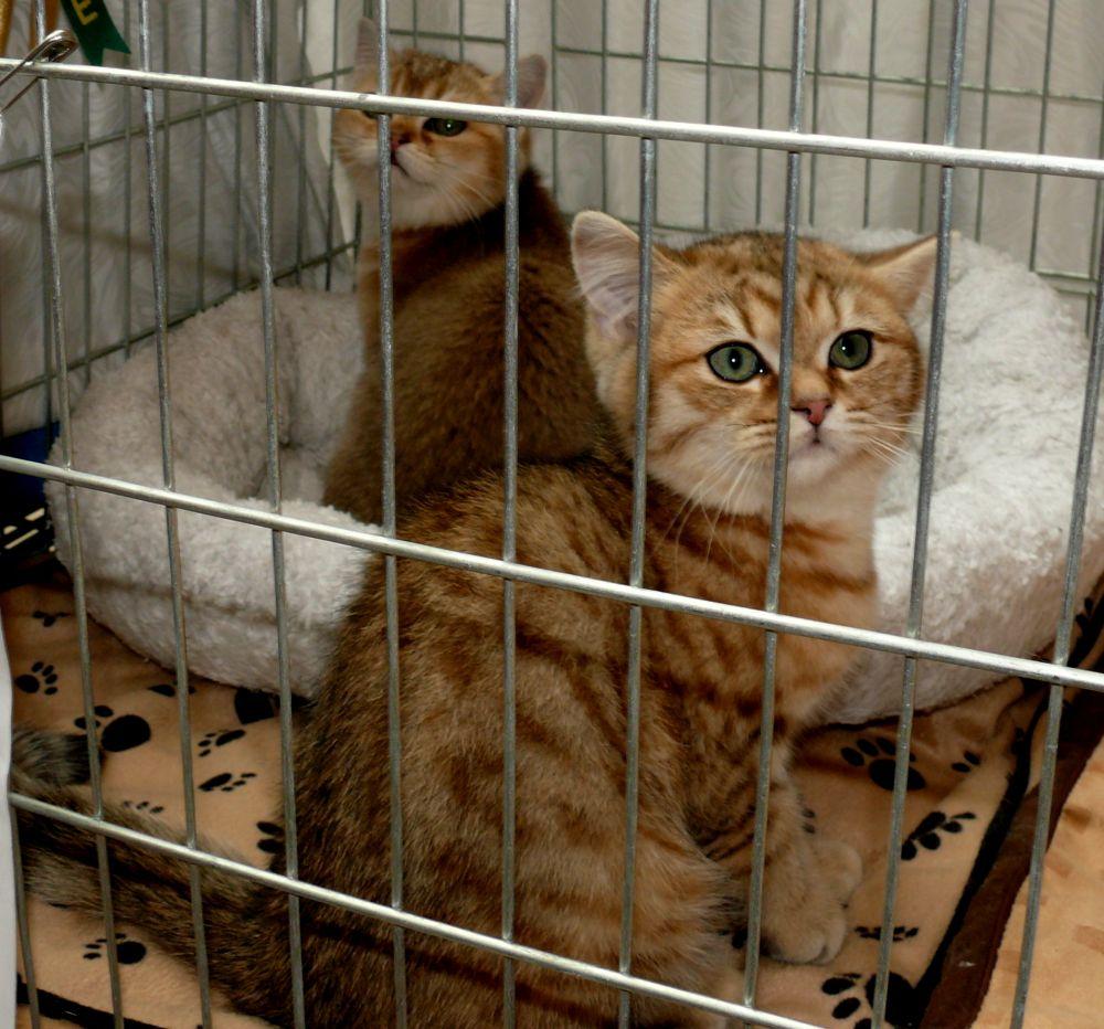 Kačiukai. Slaptai.lt nuotr.
