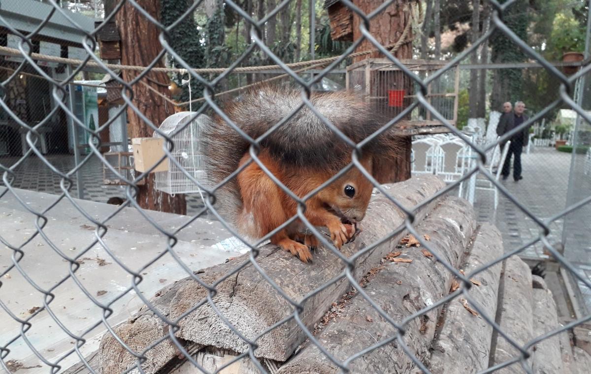 Voveraitė. Slaptai.lt nuotr.