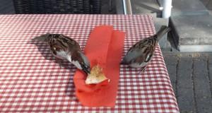 Žvirbliai alkani. Slaptai.lt nuotr.