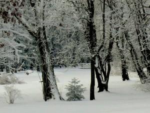 Burbiškių parko fragmentas