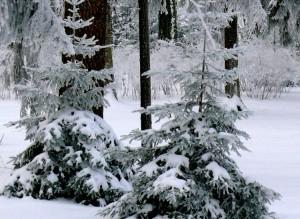Eglaitės Burbiškių parke