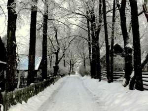 Kunigiškių kaimas (3)