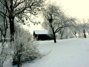 Kunigiškių kaime (2)