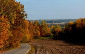 Kelias į Rumbonis