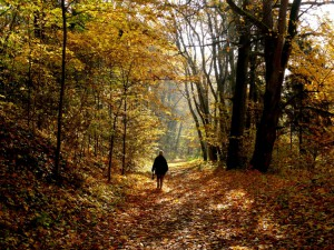 Vidzgiris rudenį