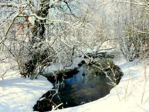 Balandžio sniegas (1)