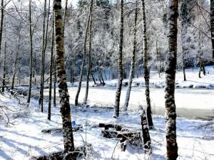 Balandžio sniegas (10)