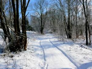 Balandžio sniegas (11)