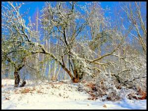 Balandžio sniegas (12)