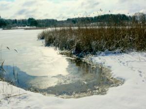Balandžio sniegas (14)