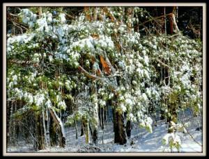 Balandžio sniegas (15)