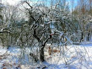 Balandžio sniegas (16)