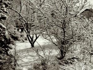 Balandžio sniegas (18)