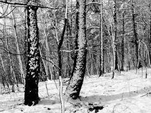 Balandžio sniegas (20)