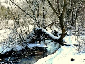 Balandžio sniegas (21)