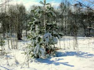 Balandžio sniegas (23)