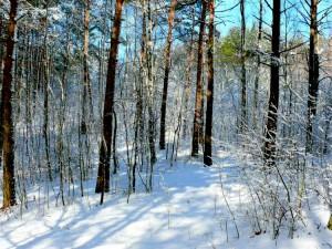 Balandžio sniegas (25)