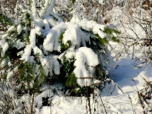 Balandžio sniegas (26)