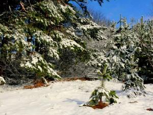 Balandžio sniegas (28)