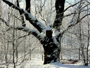Balandžio sniegas (3)