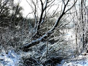 Balandžio sniegas (5)