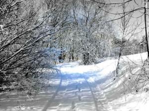 Balandžio sniegas (7)