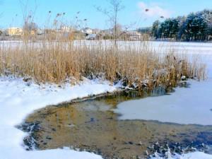 Balandžio sniegas (8)