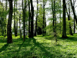 Botanikos sode (15)