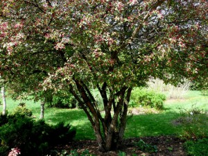 Botanikos sode (25)
