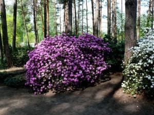 Botanikos sode (3)