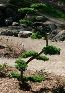 Botanikos sode (6)