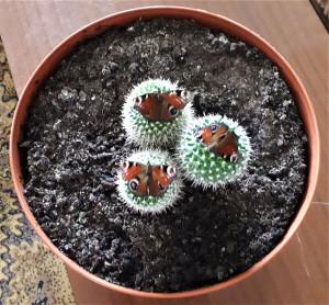 Trys drugeliai, trys kaktusai. Slaptai.lt nuotr.