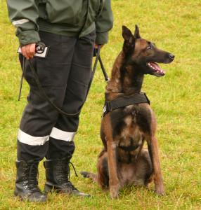 Policininko šuo. V.Visocko nuotr.