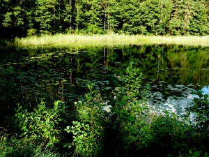 Linkmeno ežero fragmentas