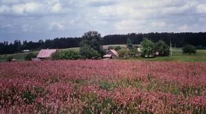 Vangelonių kaimas netoli Nemunaičio